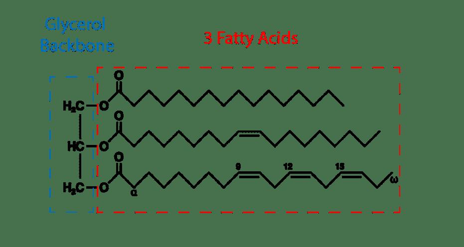 Estructura de la cadena de ácidos grasos
