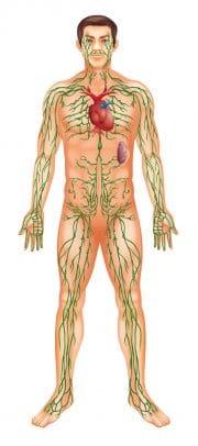Cuerpo humano mostrando el sistema simpático
