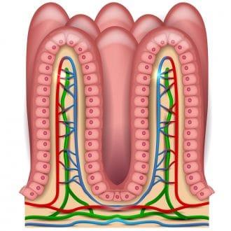 Vellosidad del estómago