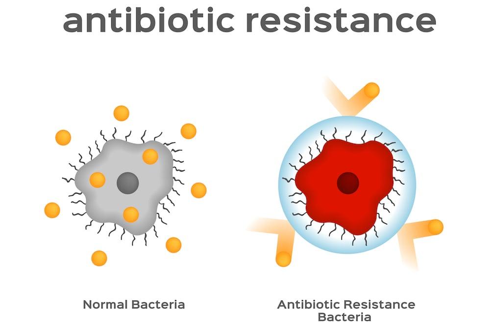 dailyCBD-Patologia-resistenza-antibiotica-3
