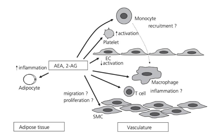 dailyCBD-patologia-aterosclerosi-3