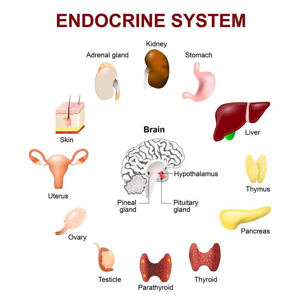 dailyCBD-Patologia-disturbo-endocrino-3