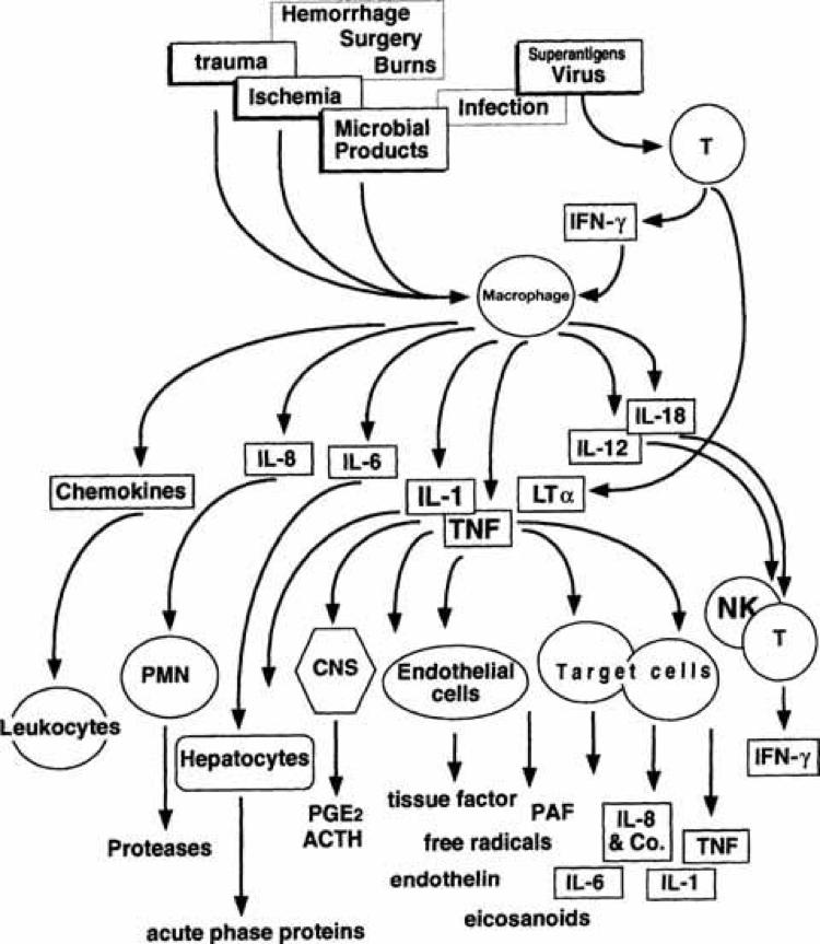 dailyCBD-patologia-infiammazione-2
