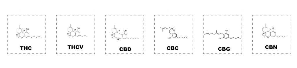 cannabinoidi-effetto-entourage