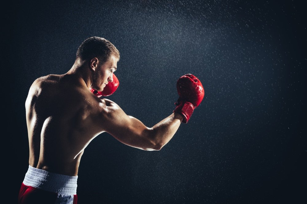 boxer cbd
